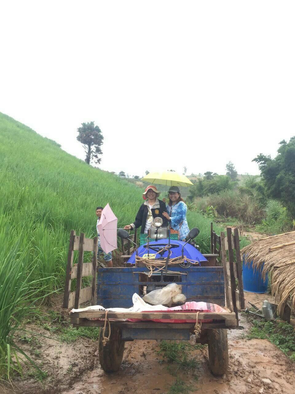黒ガリンガル(クロガリンダ)の収穫の様子
