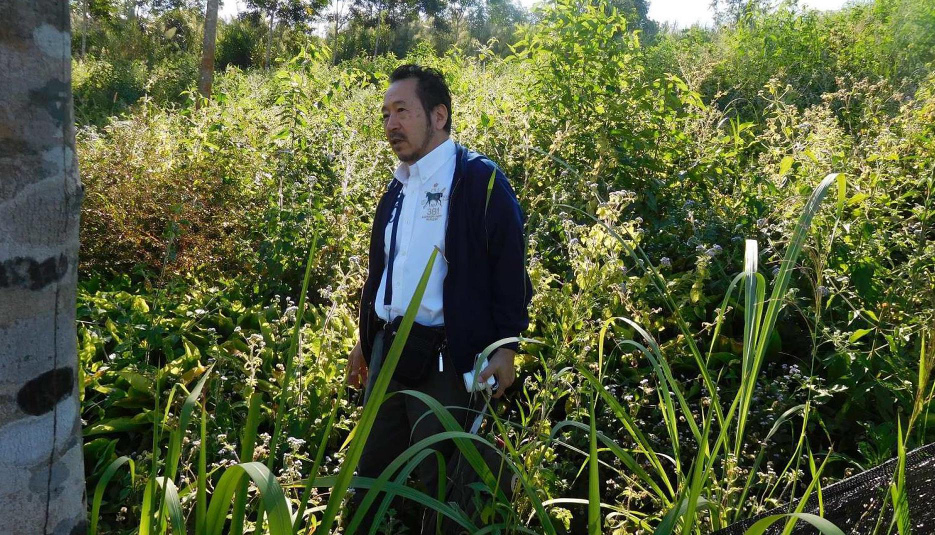 黒ガリンガル(クロガリンダ)の収穫風景